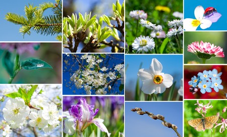 collection of spring flowers and plants photo