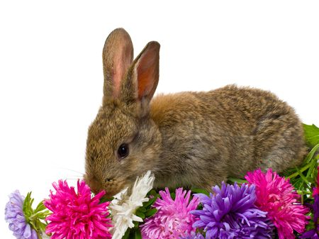 bunny and aster flowers, isolated on white Stock Photo - 4616715