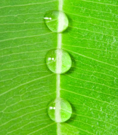 close-up three water drops on a green leaf Stock Photo - 4713382
