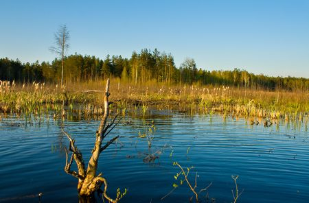 rushy: rushy swamp in forest landscape, spring time Stock Photo