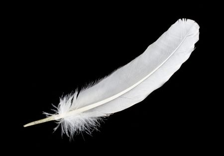 feather pen: close-up big white feather, isolated on black Stock Photo