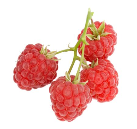 branch of ripe raspberries, isolated on white