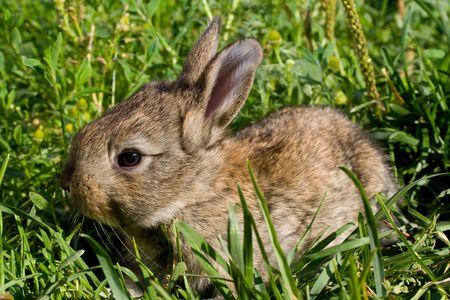 little rabbit on green grass Stock Photo - 6425479