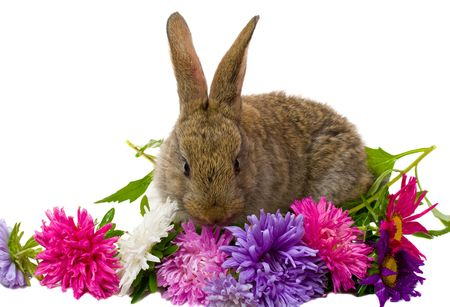 bunny and aster flowers, isolated on white Stock Photo - 6425501