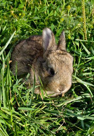 gray little rabbit into green grass Stock Photo - 6483580