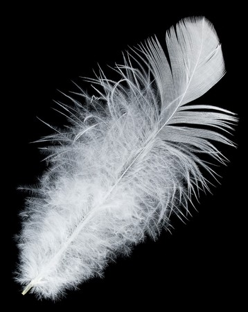 white feather: close-up white feather, isolated on black