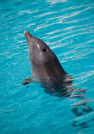 dolphin swimming in water Stock Photo - 7712592