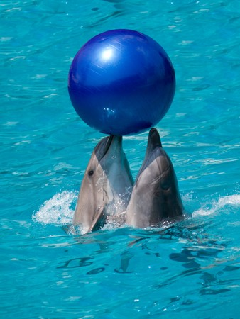 ball of water: two dolphins playing with ball