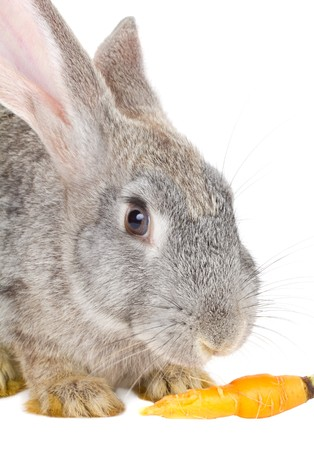 close-up rabbit eating carrot, isolated on white Stock Photo - 7796809