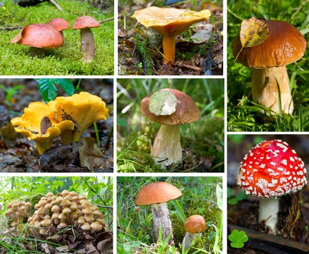 inedible: forest mushrooms set Stock Photo