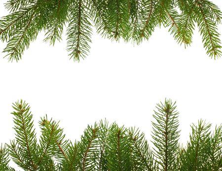 spar: frame van firtree takken, geïsoleerd op wit Stockfoto