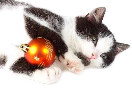 close-up kitten playing with christmas decoration, isolated on white Stock Photo - 8216932