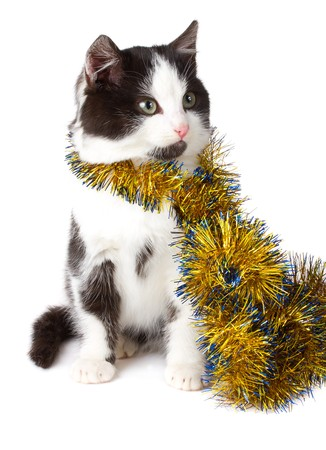 close-up cat with garland, isolated on white Stock Photo - 8216936