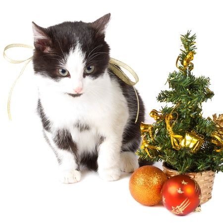 close-up cat and christmas decorations, isolated on white Stock Photo - 8364497