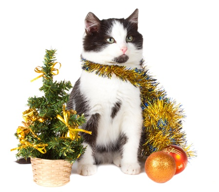 close-up kitten and christmas decorations, isolated on white photo