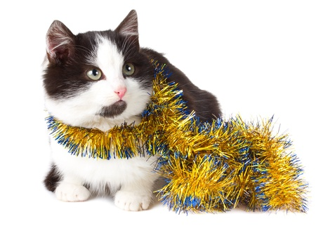 close-up cat with garland, isolated on white Stock Photo - 8364544