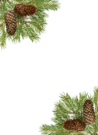 boughs: frame from firtree branch and cones, isolated on white