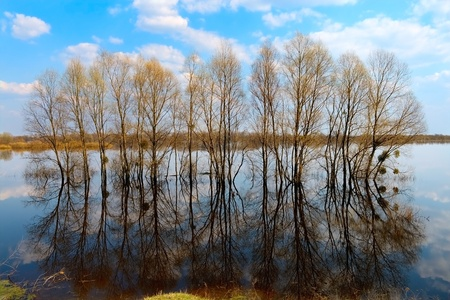many trees in water-meadow photo