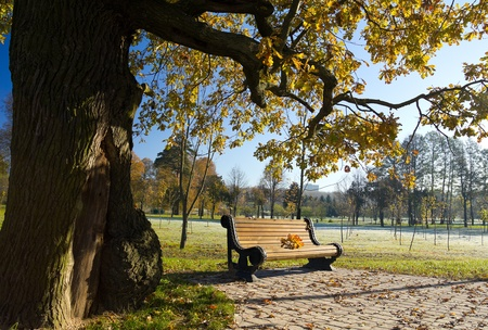 tranquil: bench under oak in autumn park Stock Photo