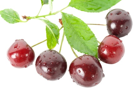 ripe cherries with leaves, isolated on white photo