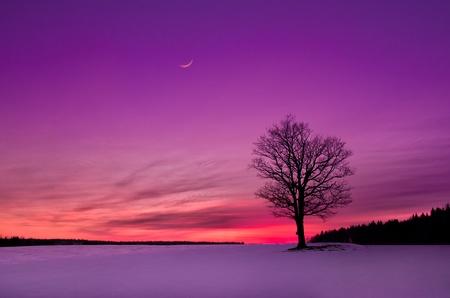 フィールドの牧歌的な夕日