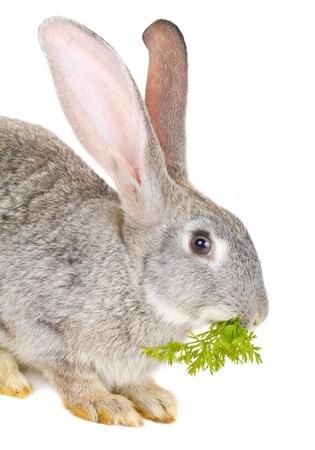 close-up rabbit eating leaf, isolated on white Stock Photo - 9406781