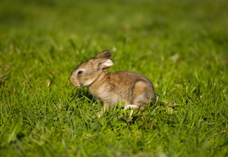 gray bunny on green grass background Stock Photo - 9406798