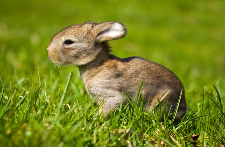 gray bunny on green grass background Stock Photo - 9504945