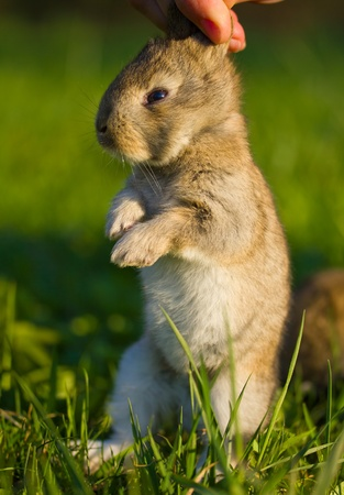 gray bunny in hand on green background Stock Photo - 9592556