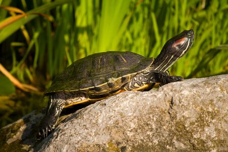 close-up tortoise sitting on stone Stock Photo - 10042637