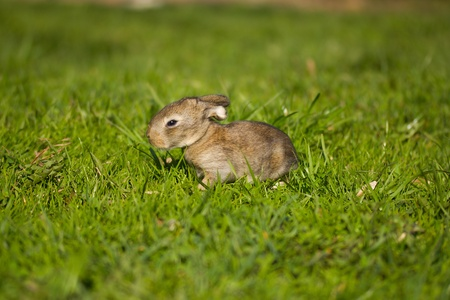 gray bunny on green grass background Stock Photo - 10042636