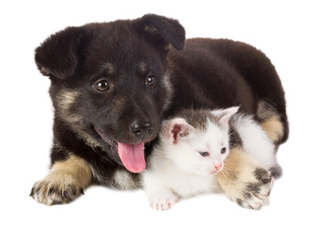 close-up puppy and kitten, isolated on white photo