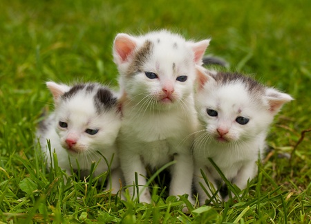 close-up black and white kittens on green grass