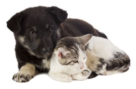 closeup puppy: close-up puppy and cat, isolated on white