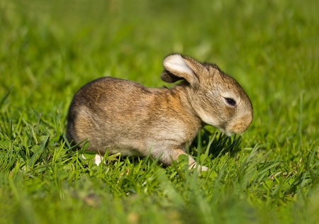 gray bunny on green grass background Stock Photo - 11220812