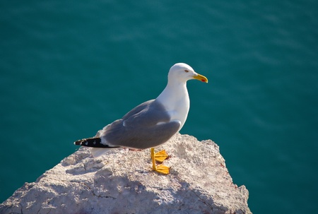 close-up seagull on stone against blue background Stock Photo - 11937182