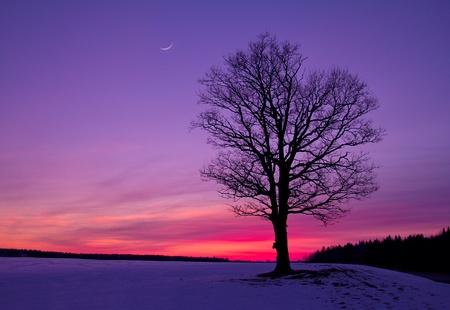 idyllic sunset in field photo