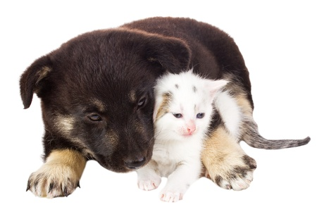 valentines dog: close-up puppy and cat, isolated on white
