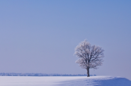 lonely oak tree in winter photo