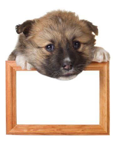 close-up puppy with frame, isolated on white photo