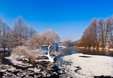 trees with frost on winter river photo