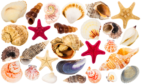 beautiful seashells collection, isolated on white