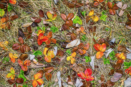 turf pile: autumn multicolored dry leaves background Stock Photo