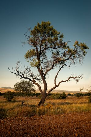 Lonely tree on a summer afternoon.