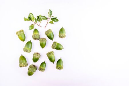 group of acorns with white background