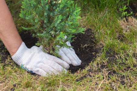 hands planting a tree close up view Stock Photo