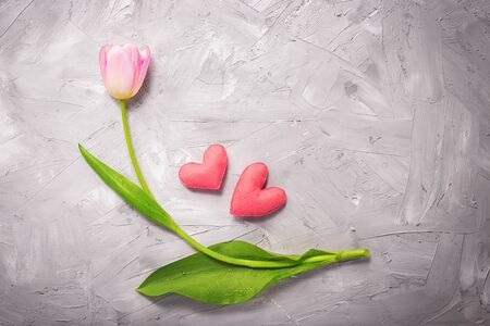 pink single tulip on a gray background with heart figure Stock Photo