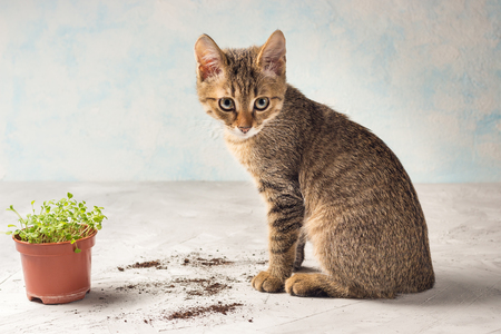 brown kitten with forget-me-not sprouts