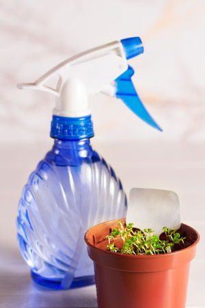 seedlings of forget-me-not flower in a plastic pot with sprayer Stockfoto