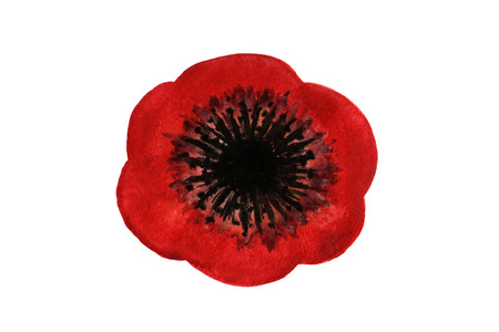 Red watercolor Poppy over white background. Hand-drawn poppy, painted in watercolor. Stock Photo